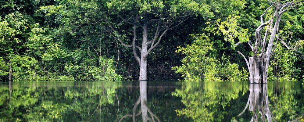 Amazonie Igarape