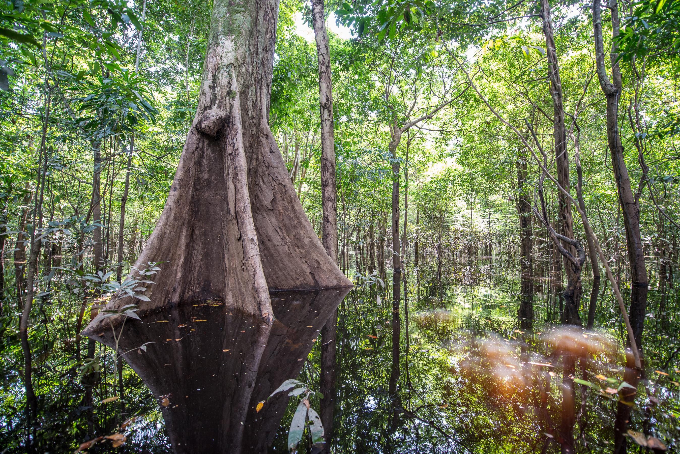 Anavilhanas lodge forêt inondée