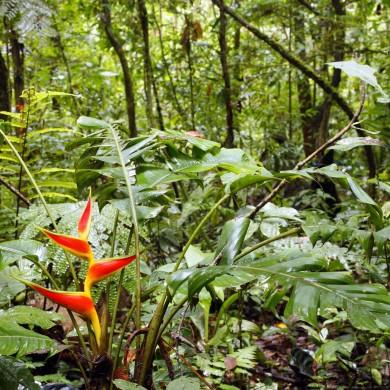 Forˆêt amazonienne Fleur tropicale