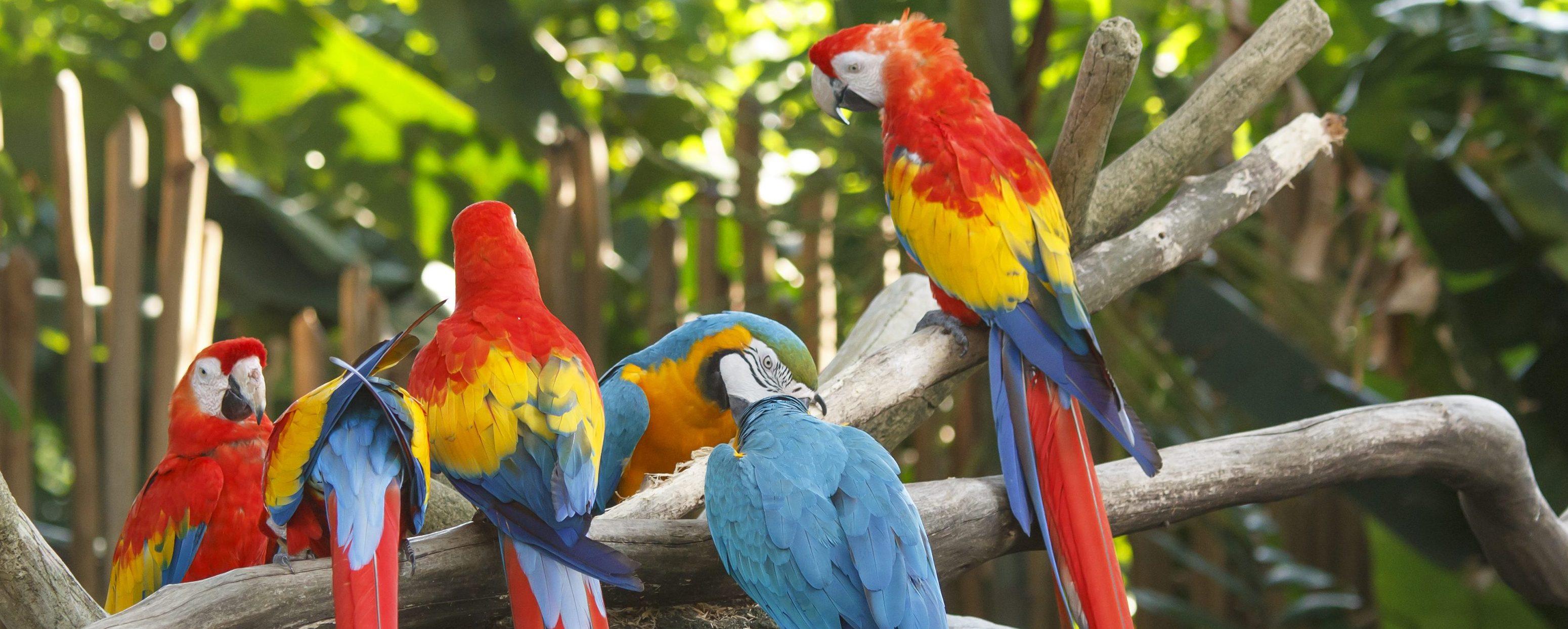 Park bird of Iguacu