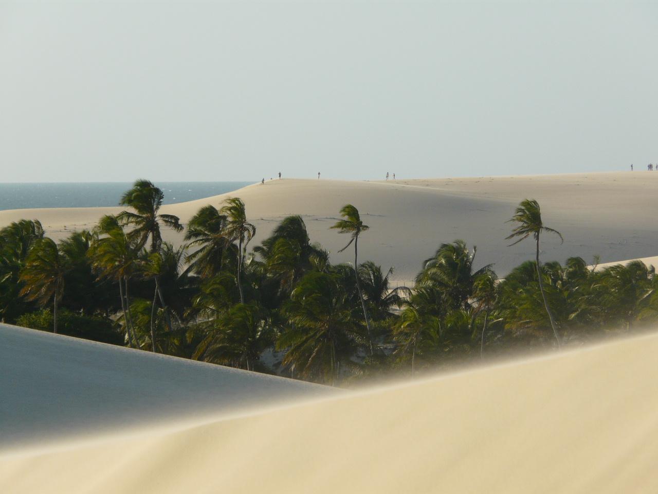 Jericoacoara dunes et cocotiers