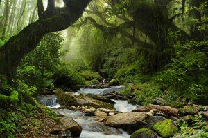 Amazing View of Amazon Ecopark