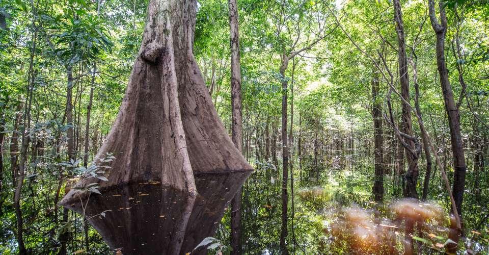 Forêt Amazon Eco Park